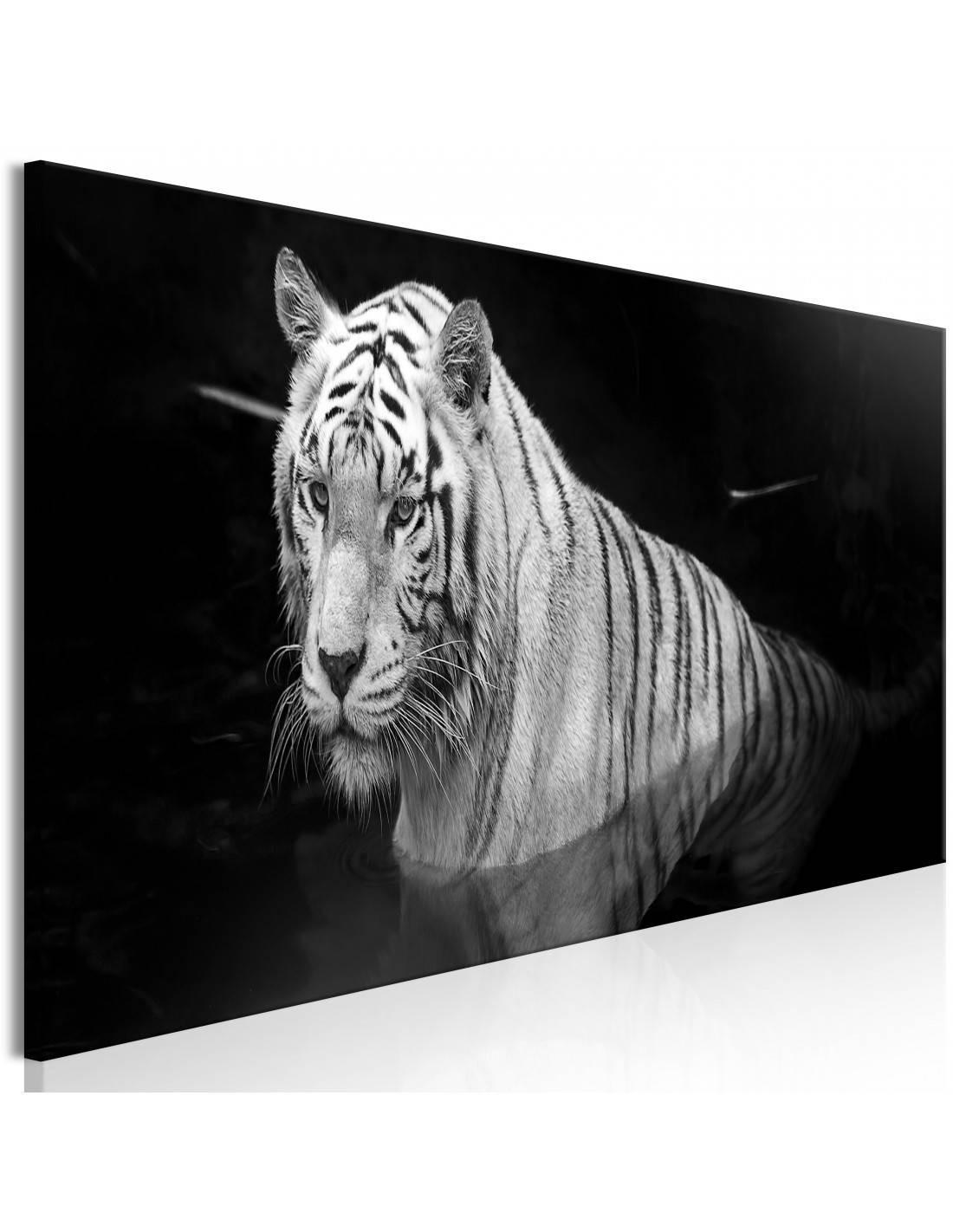 Obrazy tygrys