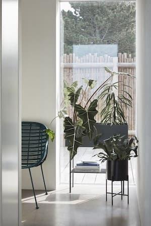 Doniczki na metalowym stojaku przy oknie